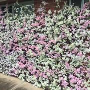 Blossom Wall 2